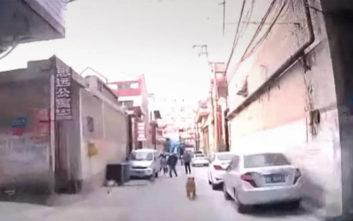 Το ασθενοφόρο στον αναίσθητο άνθρωπο το οδήγησε ο… σκύλος του