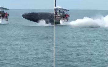 Επικίνδυνα κοντά στο σκάφος βρέθηκε η... παιχνιδιάρα φάλαινα
