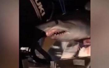 Κυκλοφορούσαν στον αυτοκινητόδρομο με έναν καρχαρία να κρέμεται από τη βάρκα τους