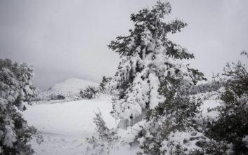 Μέχρι και 1,5 μέτρο το χιόνι στο νομό Τρικάλων