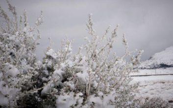 Καλλιάνος: Έρχονται χιόνια στο κέντρο της Αθήνας τη Δευτέρα