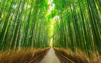 Εντυπωσιακές φωτογραφίες στο Δάσος των Μπαμπού