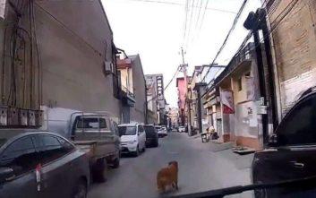 Σκύλος οδηγεί τους διασώστες στο λιπόθυμο αφεντικό του
