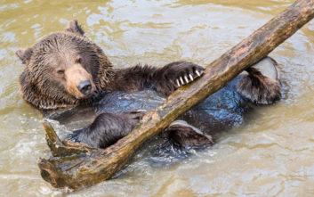 Τρίχρονος χάθηκε για δύο μέρες στο δάσος και λέει πως έκανε παρέα με μία αρκούδα