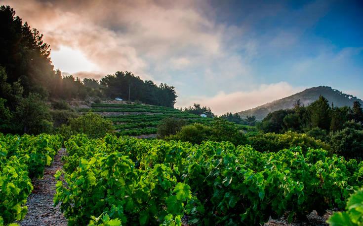 Δεκαεννέα ακόμη διεθνή βραβεία για τα κρασιά του ΕΟΣ Σάμου, μέσα στο 2018