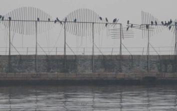 Φτερωτό θέαμα στο λιμάνι της Θεσσαλονίκης