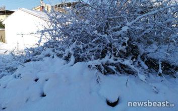 Φωτογραφίες από το χιονισμένο Μαρούσι