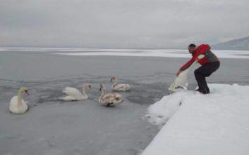 Εθελοντές σώζουν εγκλωβισμένα πουλιά στην παγωμένη λίμνη της Καστοριάς
