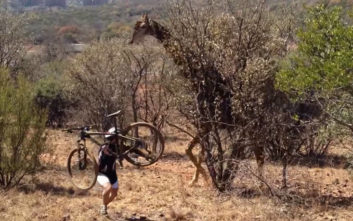 Τον μπελά του βρήκε ο ποδηλάτης από την… καμηλοπάρδαλη