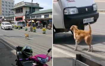 Μητέρα σκύλος προσπαθεί να σταματήσει τα αυτοκίνητα ζητώντας βοήθεια για το κουτάβι της