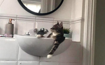 Γάτες είναι και κάνουν τα δικά τους