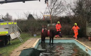 Άσχημη Πρωτοχρονιά πέρασε άλογο που έπεσε σε πισίνα