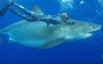 Βγήκαν βόλτα με έναν μεγάλο λευκό καρχαρία!