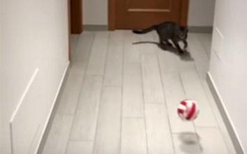 Η γάτα τερματοφύλακας