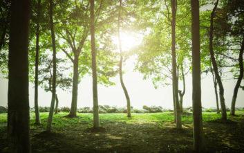 Δύο υπεραιωνόβια δέντρα διεκδικούν τον τίτλο «Ευρωπαϊκό Δέντρο 2019»