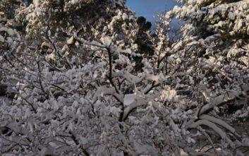 Η Φλώρινα βρίσκεται σε ολικό παγετό εδώ και 10 μέρες