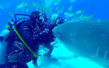 Δύτες και καρχαρίες, ένα χαρούμενο παιχνιδιάρικο κουβάρι