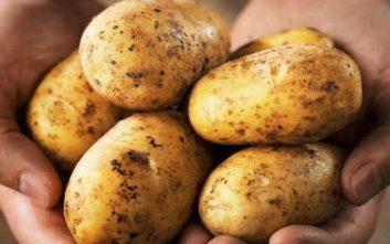 Χειροβομβίδα του Α΄Παγκοσμίου Πολέμου βρέθηκε σε φορτίο με πατάτες