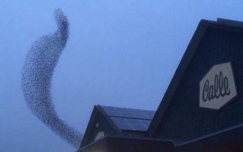 Μεγάλο πουλί χορό