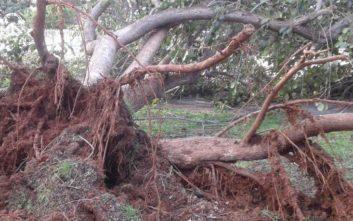 Εργασίες αποκατάστασης των καταστροφών που προκάλεσε η κακοκαιρία στον Λαγκαδά