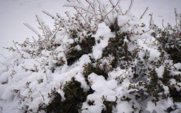 Ο χάρτης του Σάκη Αρναούτογλου για το πού θα χιονίσει