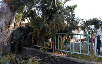 Πεσμένα δέντρα σε Αθήνα και Άργος από τους ισχυρούς ανέμους
