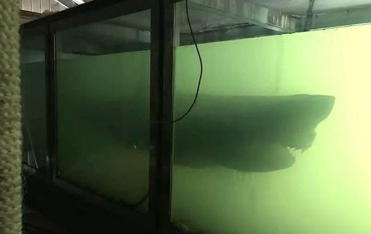Πήγαν για εξερεύνηση και βρήκαν το ξεχασμένο κουφάρι ενός λευκού καρχαρία