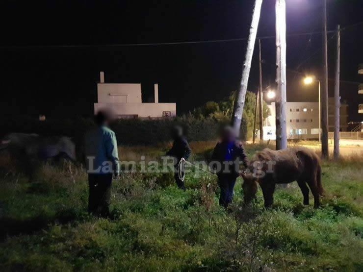 Άλογα το έσκασαν και κυκλοφορούσαν μέσα στην πόλη της Λαμίας (φωτο)