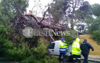 Δέντρο ξεριζώθηκε και καταπλάκωσε αυτοκίνητα στην Κρήτη