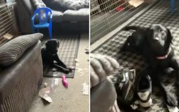 O σκύλος κομμάτιασε το δέμα της γειτόνισσας και αποκάλυψε κάτι απρεπές