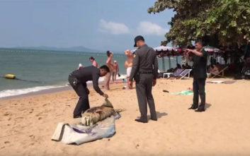 «Μυστηριώδες» χαρακτηρίστηκε το πλάσμα που ξεβράστηκε σε παραλία της Ταϊλάνδης