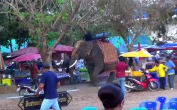 Αφηνιασμένος ελέφαντας γραπώνει κοπέλα πάνω στη μανία του