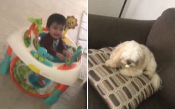 Το μωρό έκλαιγε ασταμάτητα, τον λόγο τον ήξερε μόνο το σκυλί