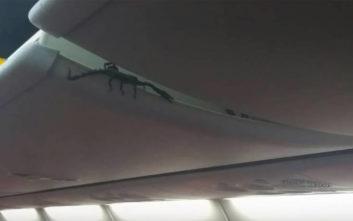 Ζωντανός σκορπιός έκανε βόλτες πάνω από τα κεφάλια των επιβατών σε αεροπλάνο