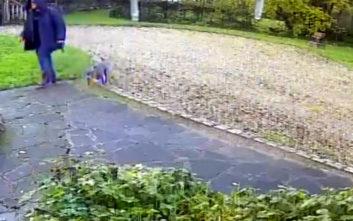 Έβγαλε βόλτα τον σκύλο του και πήγαν για… διάρρηξη