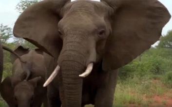 Τα πήραν άσχημα με τους τουρίστες οι… ελέφαντες