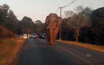 Όλοι οπισθοχώρησαν βλέποντας τον ελέφαντα να έρχεται καταπάνω τους