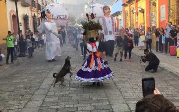 Την παράσταση στο φεστιβάλ την έκλεψε ο… σκύλος
