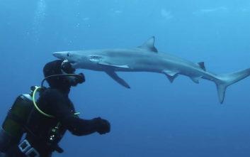 Εκεί που κολυμπούσε, ήρθε ο καρχαρίας και τον… φίλησε