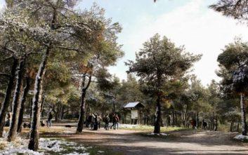 Επιτρέπεται ξανά η κυκλοφορία στα δάσος του Σέιχ Σου και του Χορτιάτη στη Θεσσαλονίκη