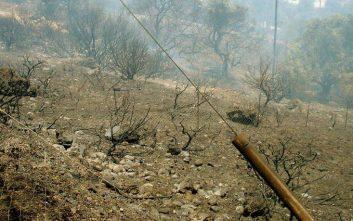 Στάχτη έγιναν 80 στρέμματα στην Ιεράπετρα