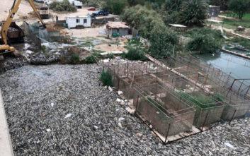 Λύθηκε το μυστήριο με τον θάνατο εκατομμυρίων κυπρίνων στον Ευφράτη