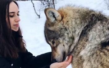 Γιόρτασαν την επέτειό τους παρέα με… λύκους