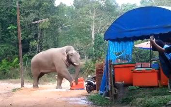 Τζαναμπέτης ελέφαντας κλέβει το φαγητό των ανθρώπων