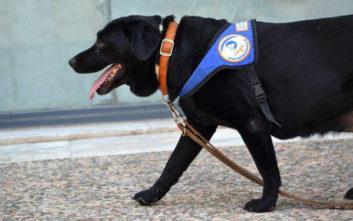 Πέθανε ο πρώτος σκύλος-οδηγός τυφλών στην Ελλάδα