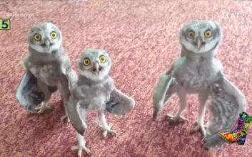 Η εκδοχή των Ράδιο Αρβύλα για τα μεθυσμένα πουλιά της Μινεσότα