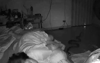 Εκεί που κοιμόταν αμέριμνη, τη δάγκωσε… πύθωνας