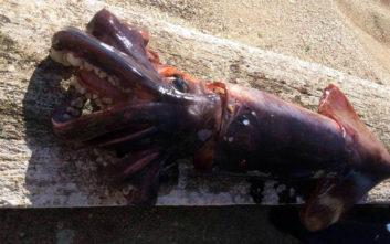 Ψάρεψαν καλαμάρι 10 κιλών στην Κεφαλονιά