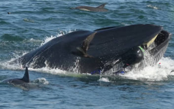 Ο σύγχρονος Ιωνάς που τον κατάπιε φάλαινα και τελικά σώθηκε