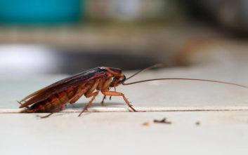 Αυτοπυροβολήθηκε προσπαθώντας να σκοτώσει μία κατσαρίδα